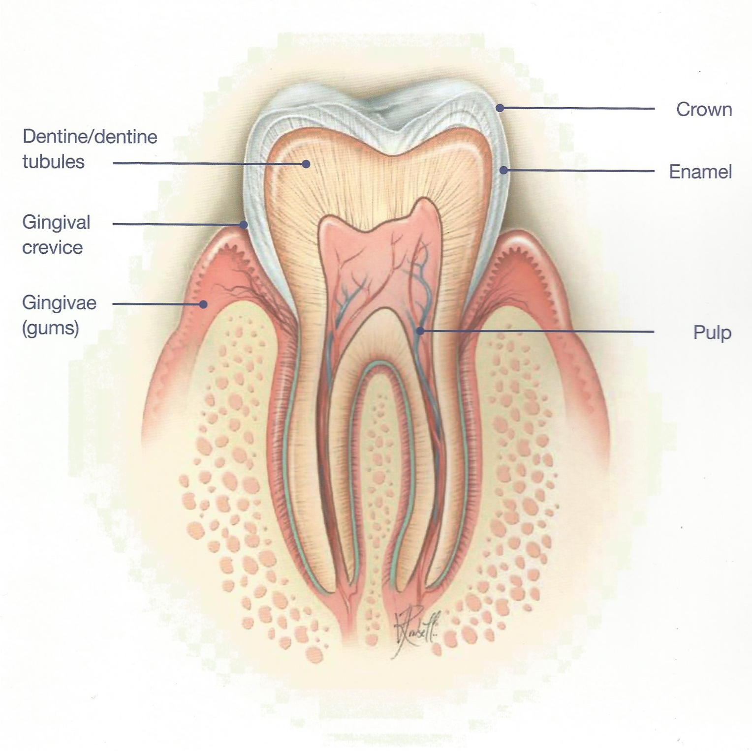 root canal treatment in Warner